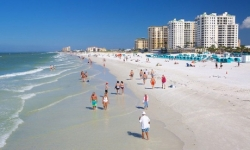 Trip to Clearwater Beach with Lunch for One, Two, or Four at Florida Dolphin Tours (Up to 36% Off)