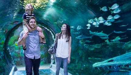 Sea Life Orlando Promotion Codes and Discount Admission Tickets